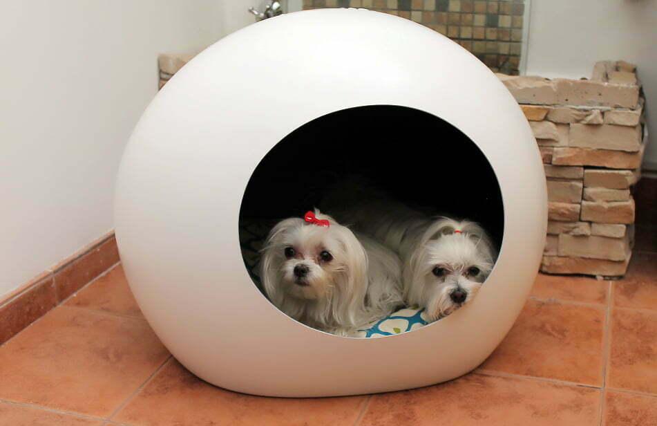 cueva perros
