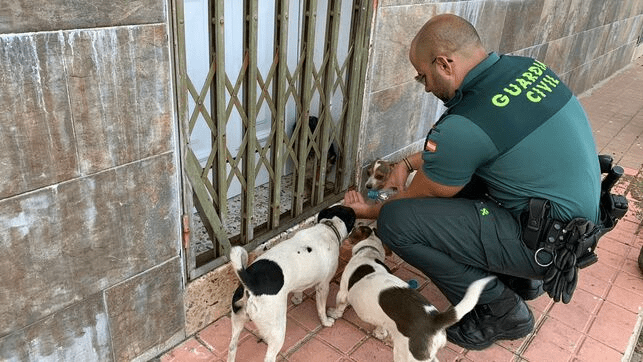Perros entrenados para detectar coronavirus aciertan al 100%