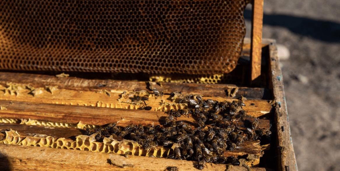 Si no salvamos a las abejas, pasaremos hambre