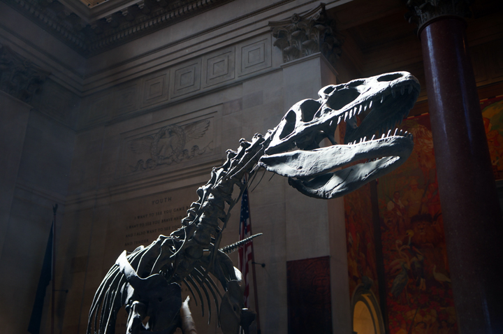 American Museum of Natural History NYC