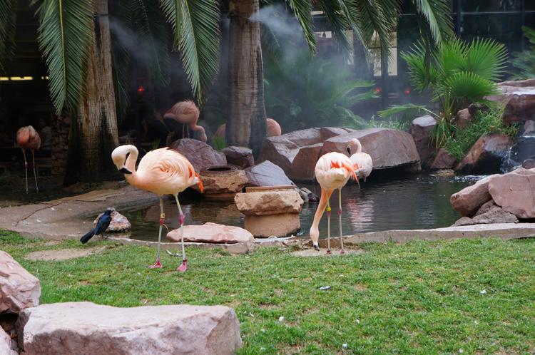 Vegas LV Flamingo Hotel