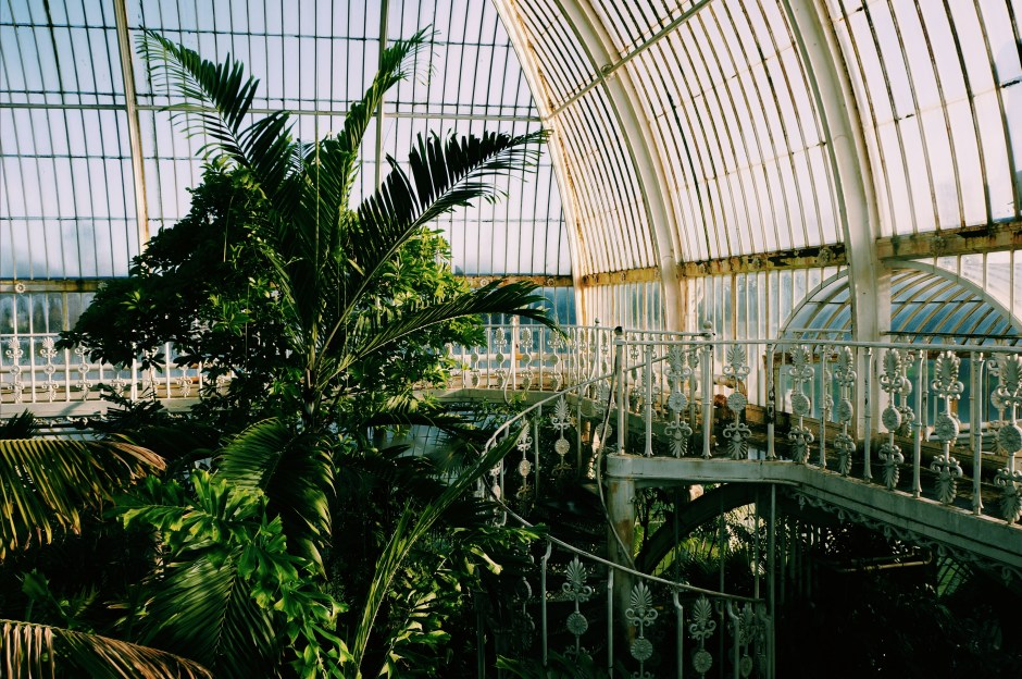 Palm House Kew Garden London Jardin botanique Londres avis 19