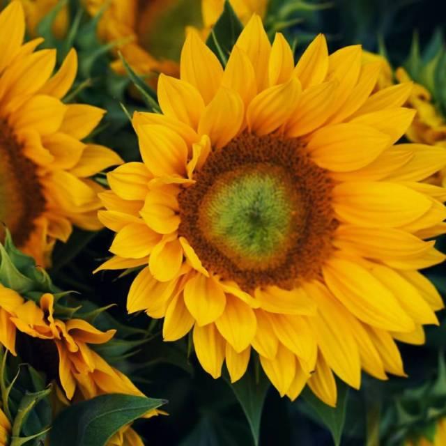 Ces beauts sur le march aux fleurs   hellip