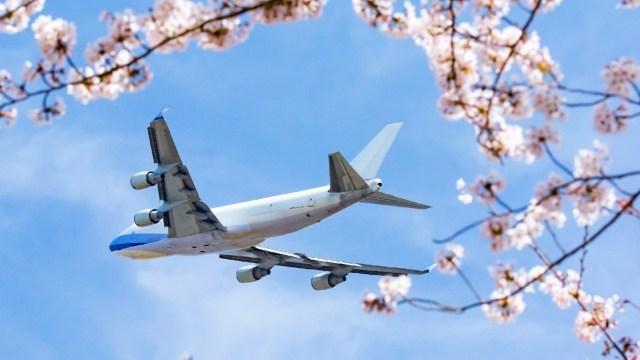 桜とジェット機