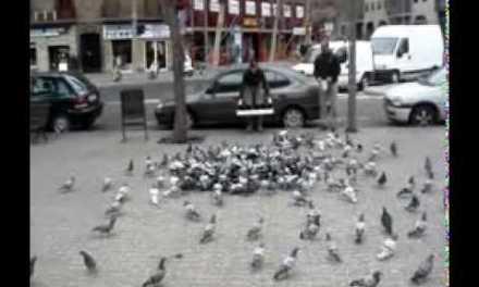 Cazando palomas en las calles de Barcelona con una catapulta