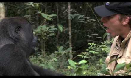 Reencuentro con un gorila