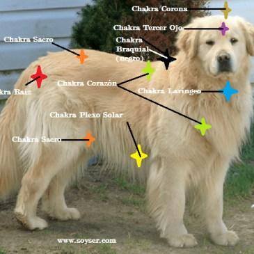 Descubre el Reiki y el Sistema de Chakras en Animales