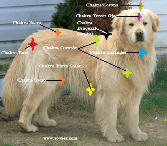 """""""Descubre el Reiki y el Sistema de Chakras en Animales"""""""