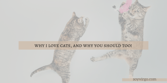 why i love cats and how you can too soyvirgo.com | Take Note