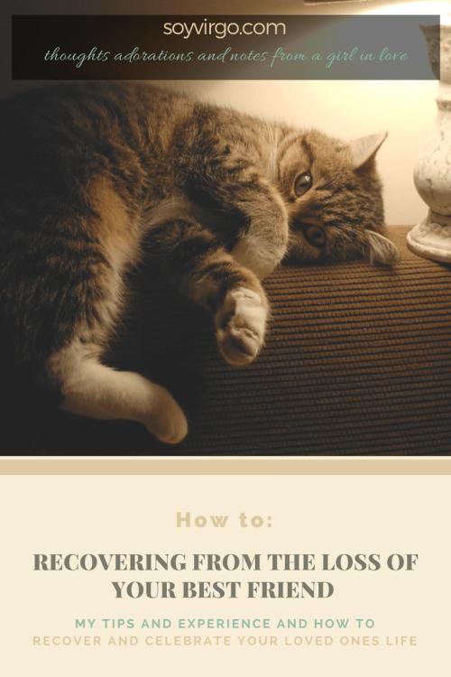 pet loss tips
