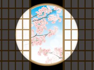 障子越しの桜