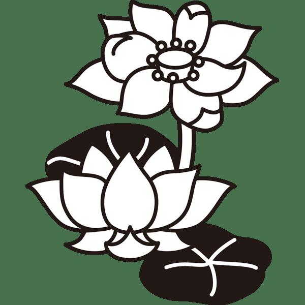 植物 蓮(ハス)(モノクロ)