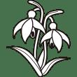 植物 スノードロップ(モノクロ)
