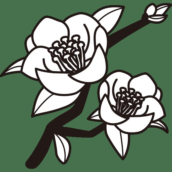 植物 ツバキモノクロ 無料イラストpowerpointテンプレート配布