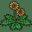 植物 たんぽぽ(カラー)