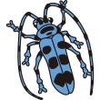 動物 虫(カミキリムシ)(カラー)