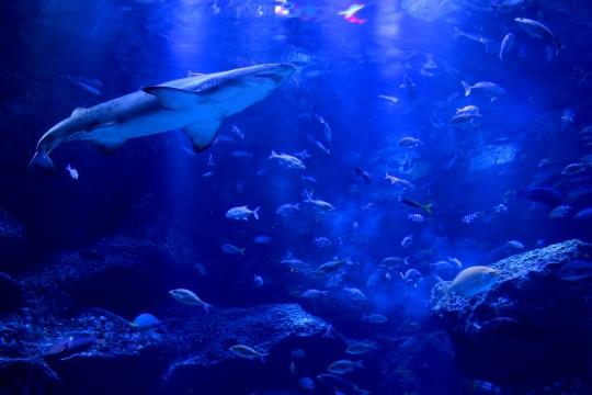 「水族館 素材」の画像検索結果