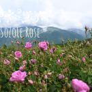 Sběr růží v Růžovém údolí 2021 – část první