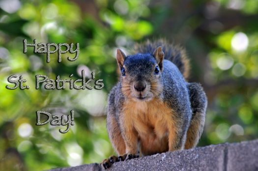happy-saint-patrick-day-squirrel
