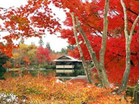 国営昭和記念公園の写真2