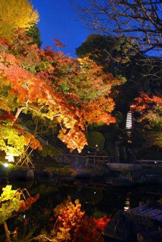 鎌倉 長谷寺の写真3