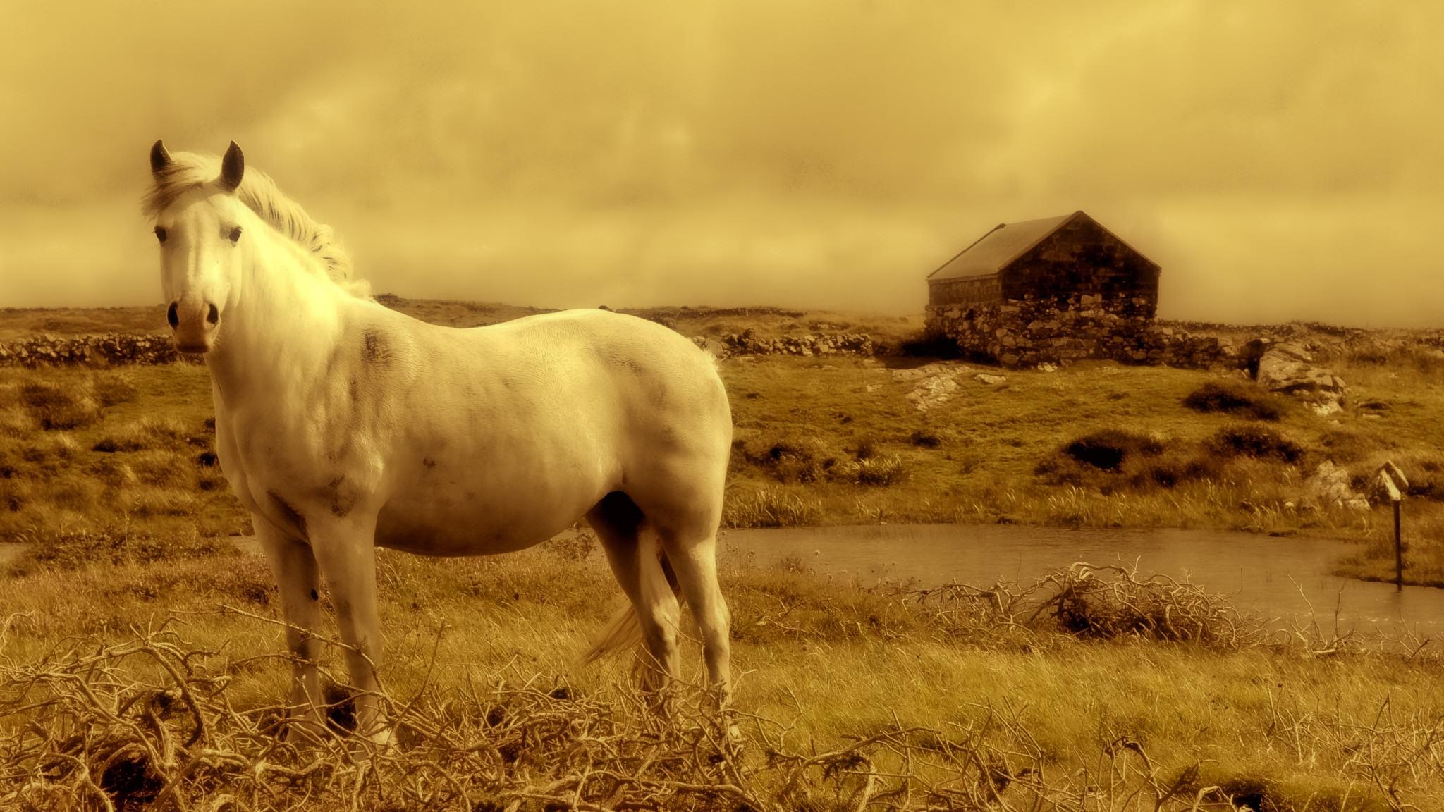 horse-928213