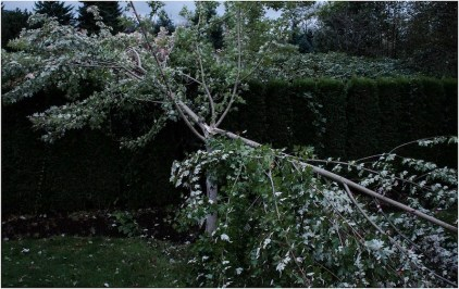 North Bend family woke to a splintered maple tree in their backyard on 9/29/13