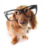 smart-dog-thumb8552068-275x300