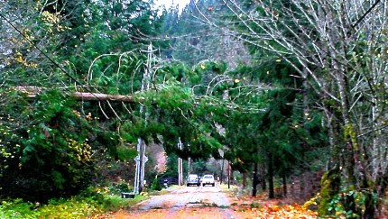 Tree down over North Fork Road, entrance into Ernies Grove, 11/2/13
