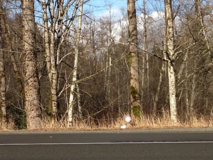 A pink 'I'm Sorry' balloon marks the spot along SE North Bend Way where a dead newborn was found on 2/12/14.