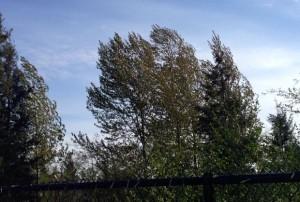 breezytrees