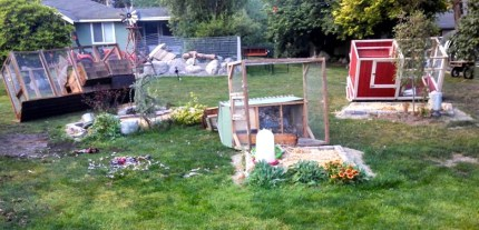 Cages and pens knocked over by bear at Baxter Barn on July 16, 2014