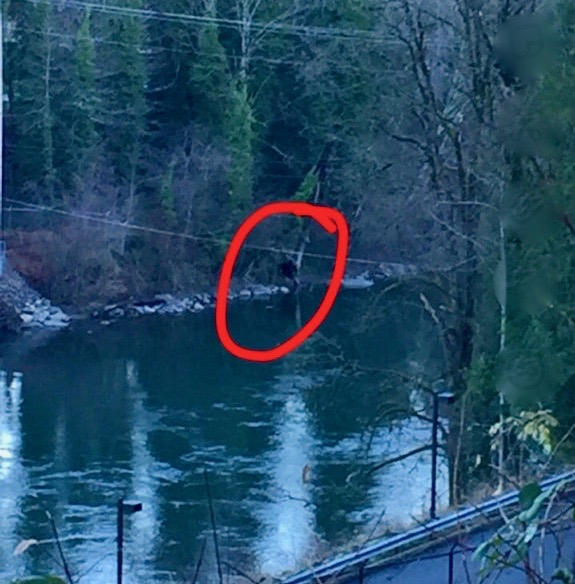 snoqualmie valley hotbed for sasquatch sightings but was bigfoot