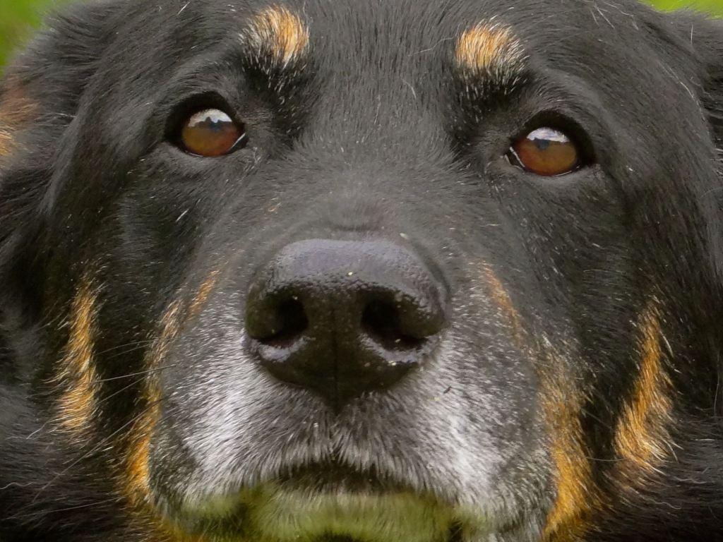chien déjà adopté