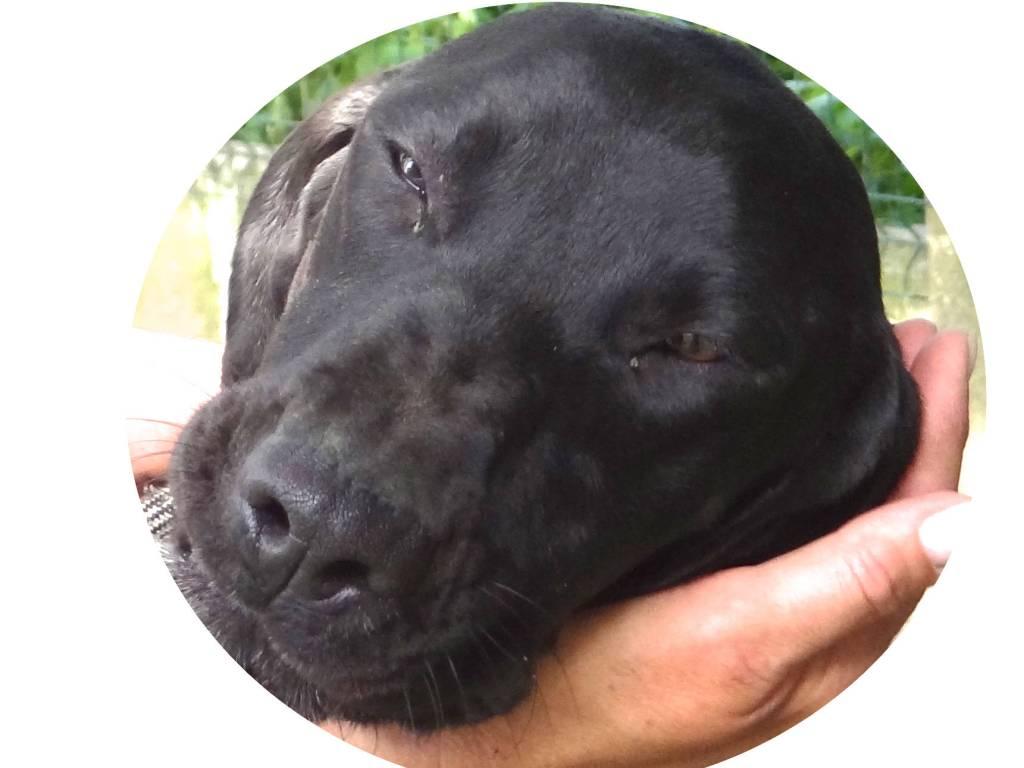 Blitz, chien adopté au refuge en 2015
