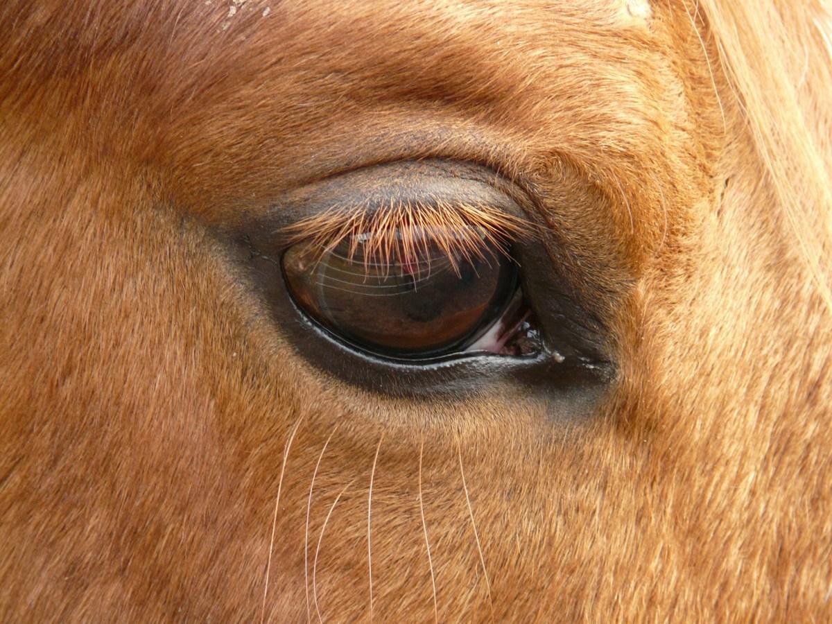 Eyebrow | Eyelash Tinting | DT