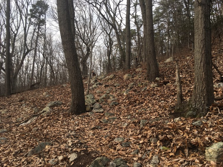 Bare trees along a brown leaf and rock strewn trail.