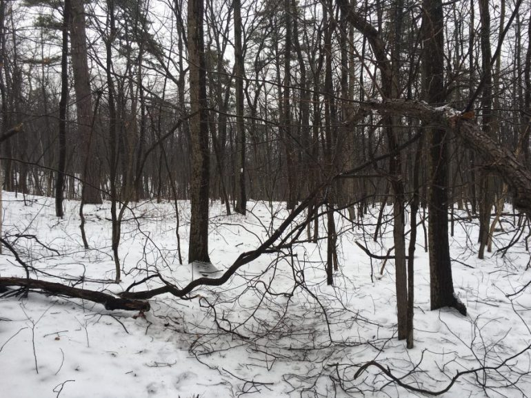 The downed trees on the AT can block the trail