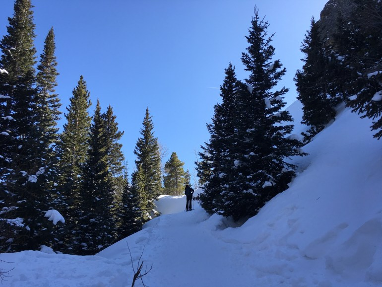 Huge evergreen trees, deep white snow, a bright blue sky and a lone hiker walking across the unmarked snow
