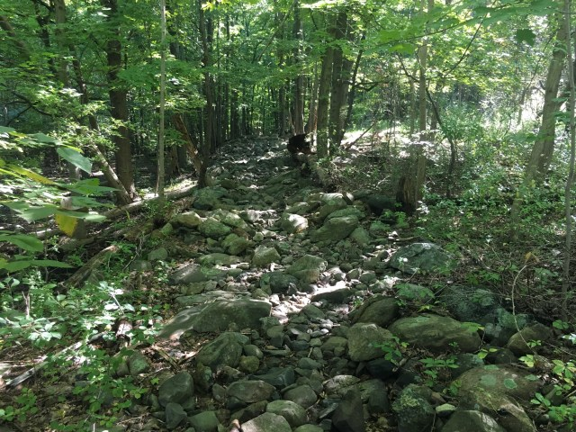Rocks of various sizes and shapes cover the Appalachian Trail