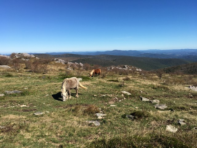 Two wild ponies graze on grass atop the meadow summit