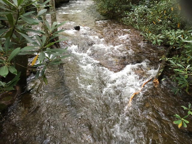 A view of rushing creek water, the banks framed with rhododendrons