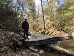 "The tree ""bridge"" over Otter Creek"