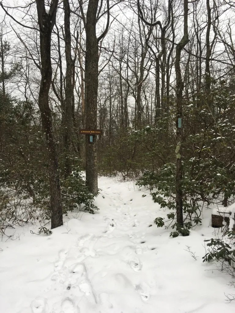 A snow covered trail bordered by trees bearing blue blaze and a sign
