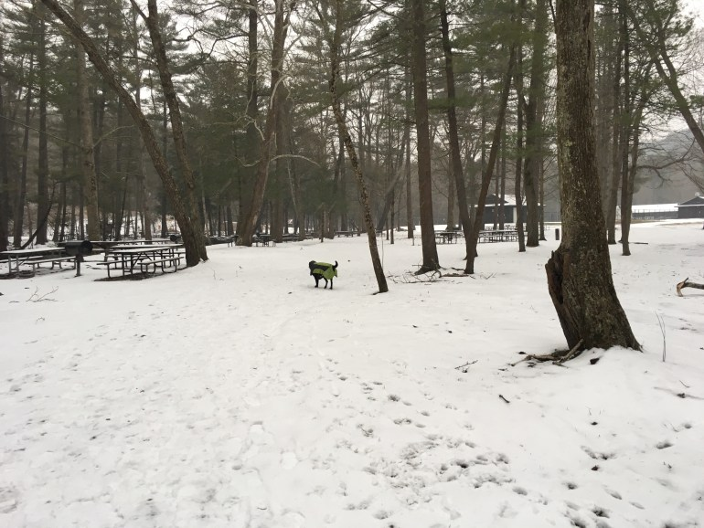 A snow covered path passes picnic tables, charcoal grills and support buildings