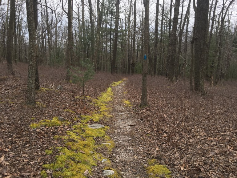Leafless trees on either side of a yellow-green moss lined flat trail