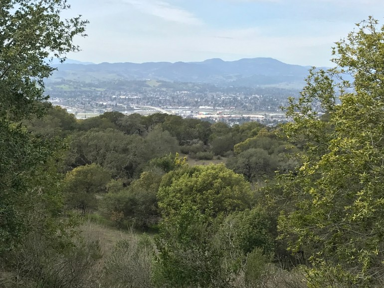 A small city is sandwiched between mountains in the background and the trees in the foreground