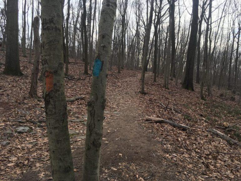 Dirt path through leafless trees