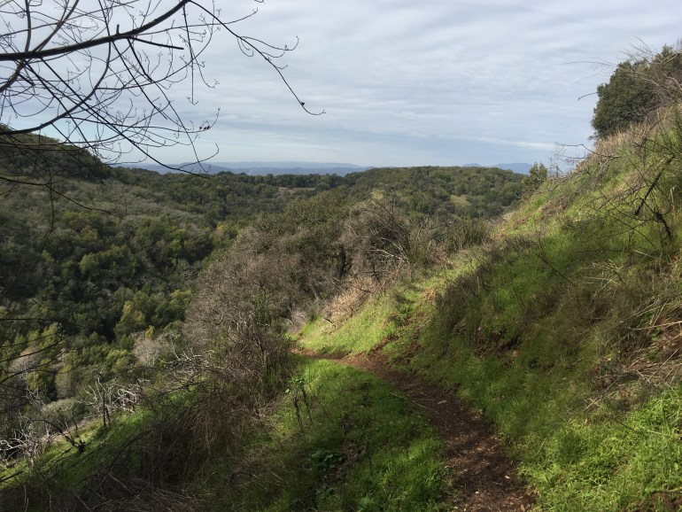 Green trees on rolling hills, a dirt trail curving to the left along the hillside
