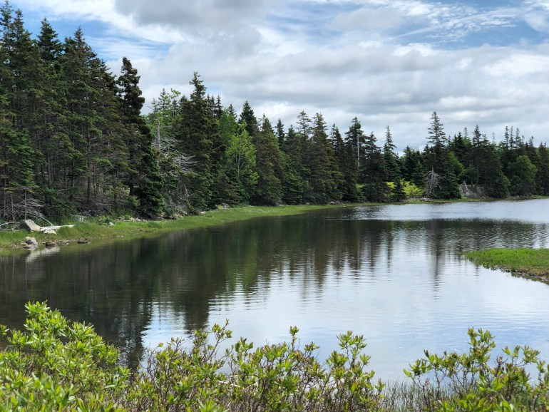 Pine trees and blue sky reflected in a still lake